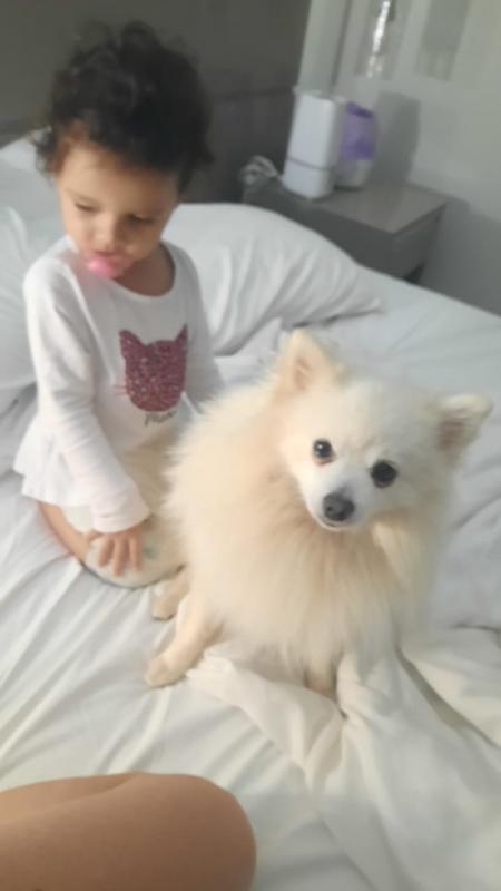Família procura por cachorro da raça Sptiz Branco Perola que atende pelo nome Lucky