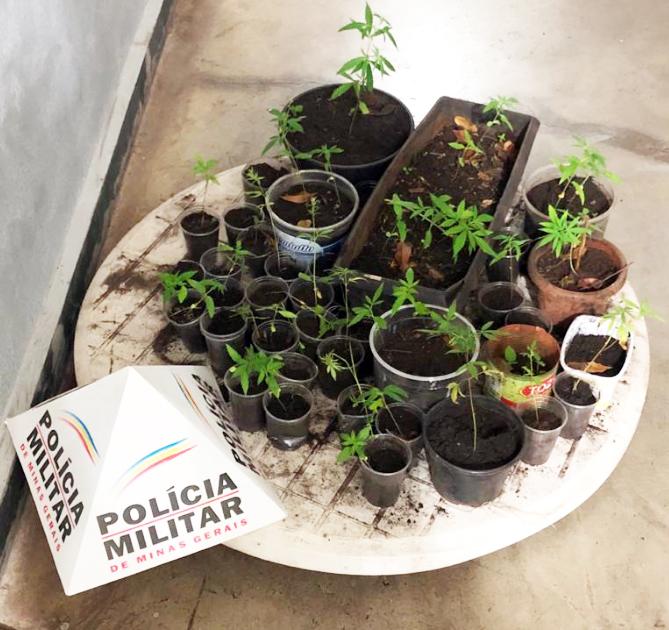 Plantação foi descoberta após denúncias anônimas - Foto: Juliano Carlos