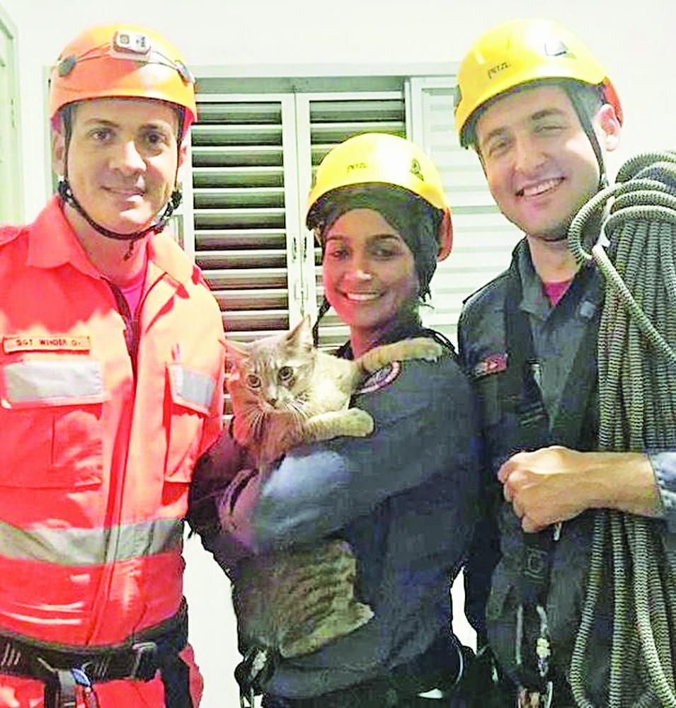 Bombeiros Militares resgatam gato que pulou do segundo andar