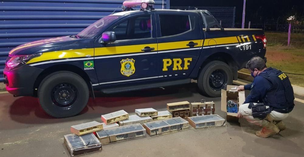 Aves foram encontradas em gaiolas pelos federais - Foto: Divulgação/PRF