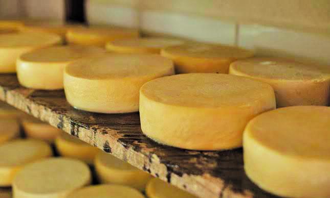 Nos próximos dias serão realizadas consultas públicas sobre regulamentos técnicos de identidade e qualidade para outros tipos de queijos - Foto: Divulgação