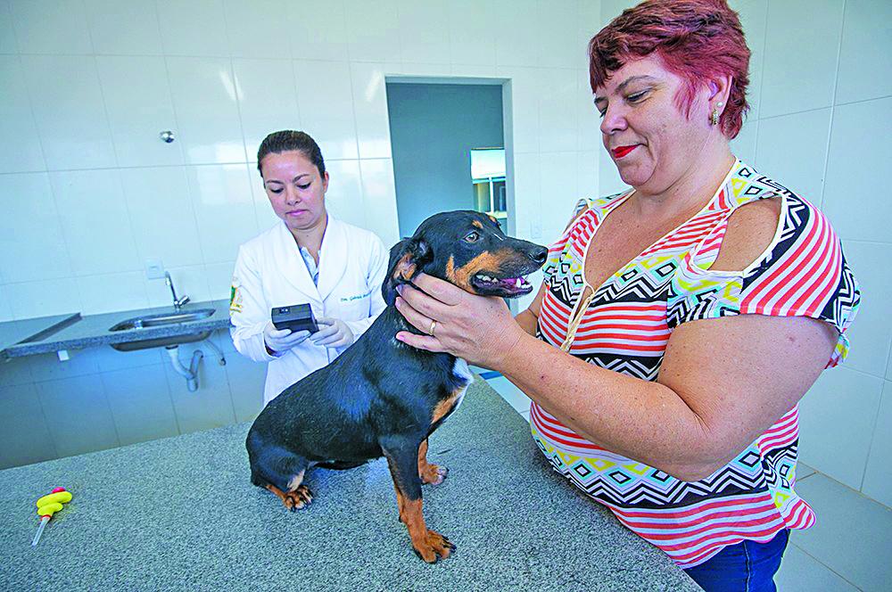 Microchip serão colocados em mais de 100 animais de rua em Araxá - Foto: Prefeitura de Araxá/Divulgação