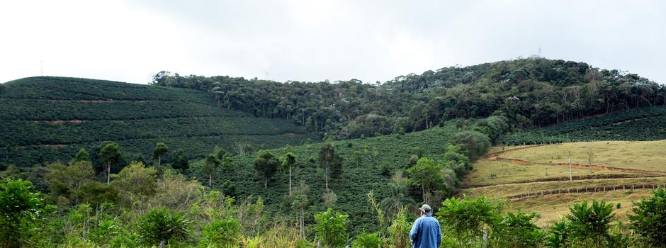 Entre outras modalidades, projeto atua na recuperação ambiental que restaura áreas degradadas com o plantio de espécies nativas e exóticas - Foto: Evandro Rodney