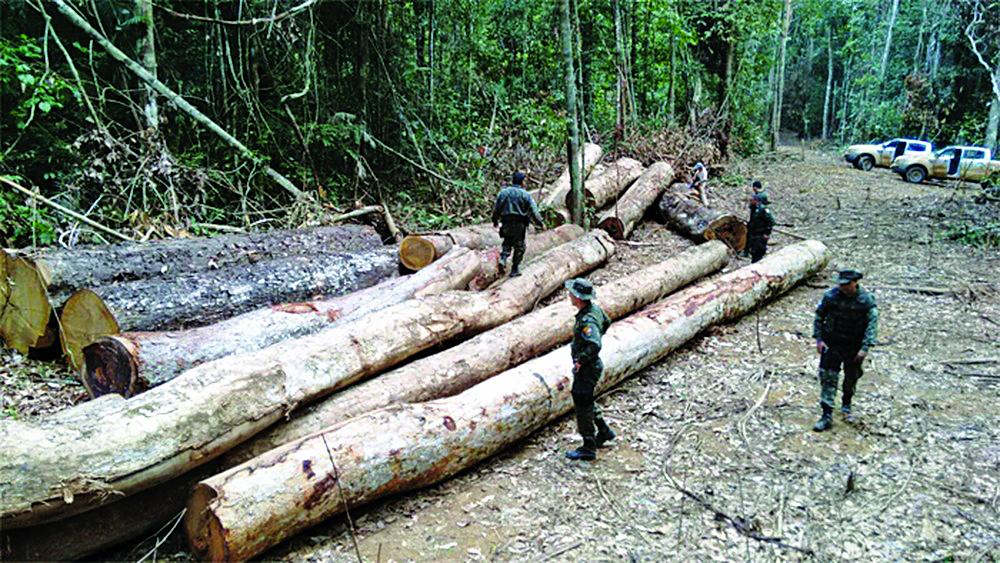 Flagrante de desmatamento na reserva Reserva Extrativista de Mato Grosso - Foto: TCE-MT/Divulgação