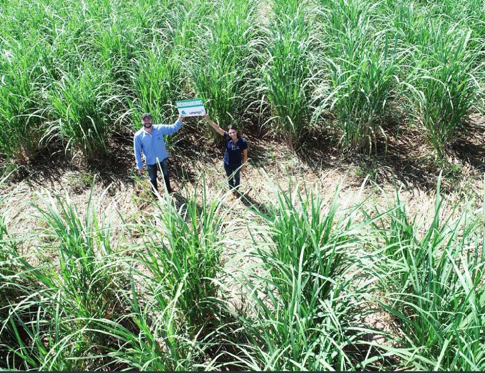 Usina Santo Ângelo, em Pirajuba, obtém resultados positivos na produtividade - Foto: Divulgação