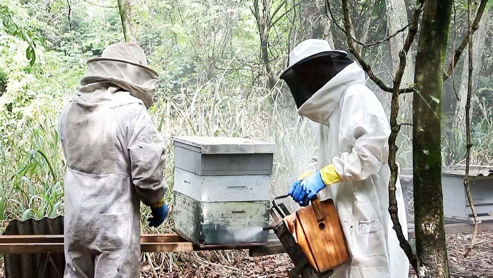 Usina de cana-de-açúcar cria estratégia para proteger apiários - Foto: Reprodução/TV TEM