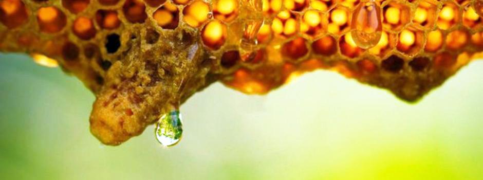 Mel de aroeira produzido no Norte de Minas é alvo de pesquisadores e do mercado - Foto: Divulgação
