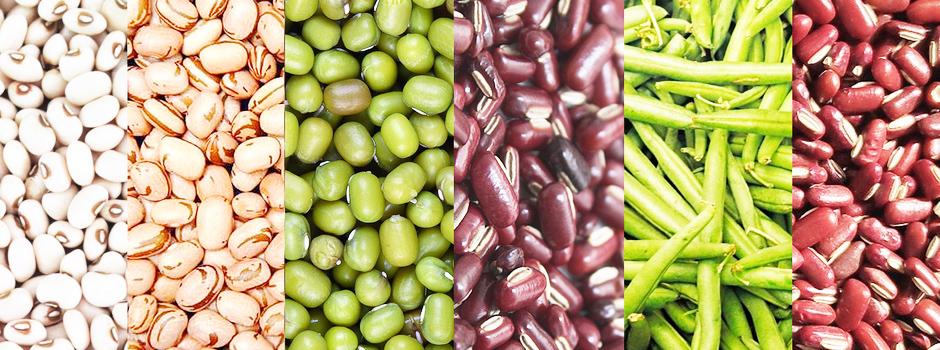 Segundo maior produtor nacional da leguminosa, estado conta com projetos de melhoramento das lavouras; saiba mais sobre a adaptabilidade de cultivares - Foto: Divulgação