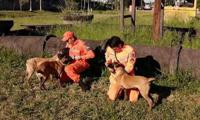 Os filhotes chegaram do Rio Grande do Sul, para substituir os cães que estão se aposentando