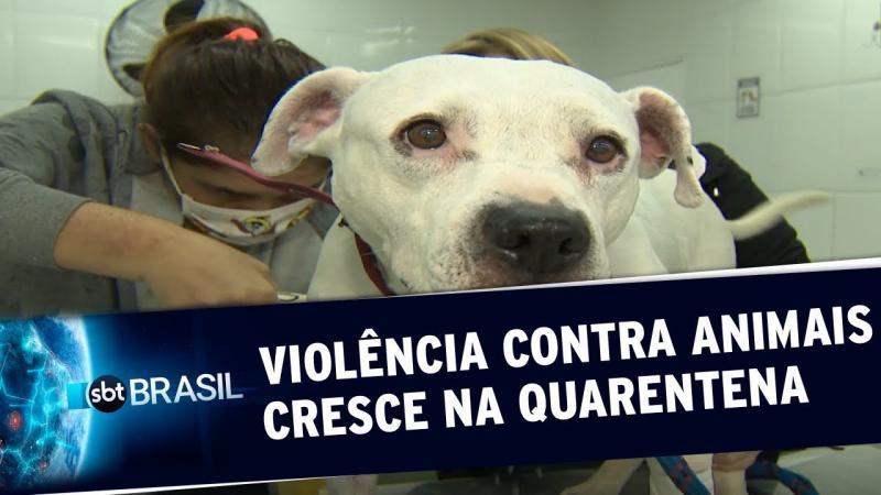 Casos de maus-tratos e abandono de animais aumentam durante a quarentena
